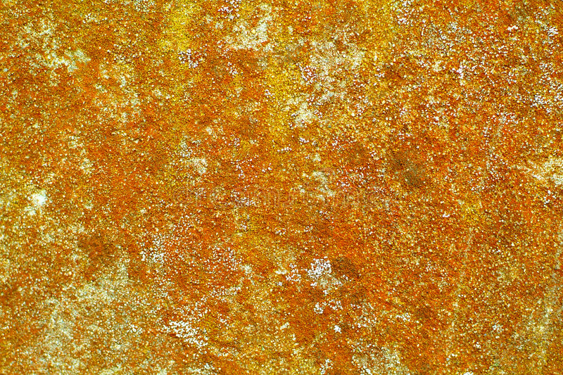 Download Lichen on old cement wall stock image. Image of background - 2510203