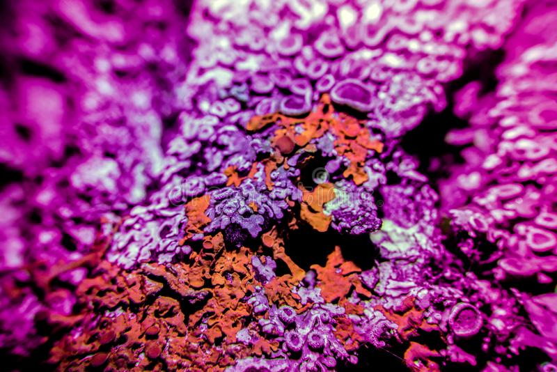 Lichen in ultraviolet stock photography