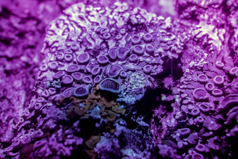 Lichen in ultraviolet royalty free stock images