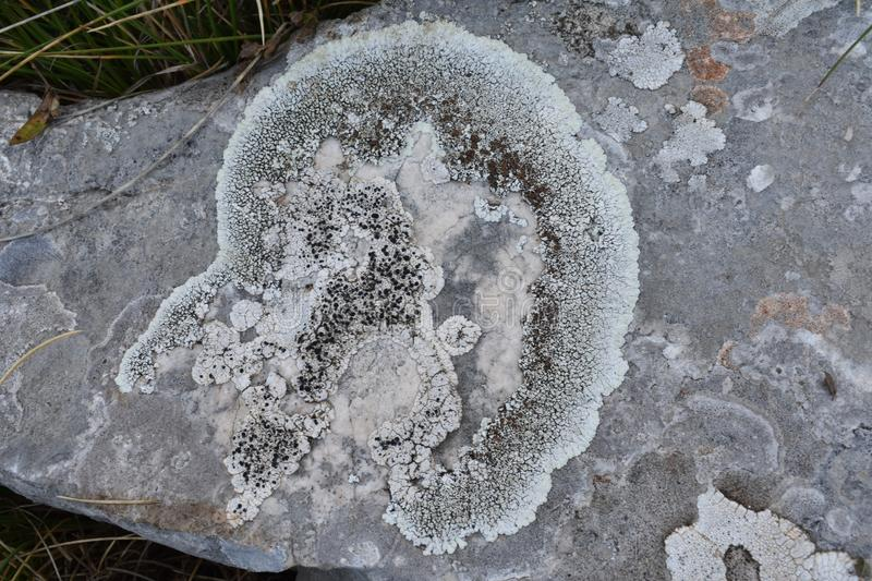 The lichen on the stone in the shape of the human head royalty free stock photo