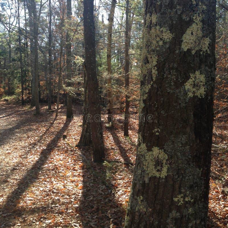 Lichen sur l'arbre photographie stock