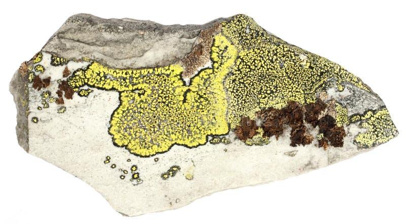 Lichen sur l'ardoise images stock