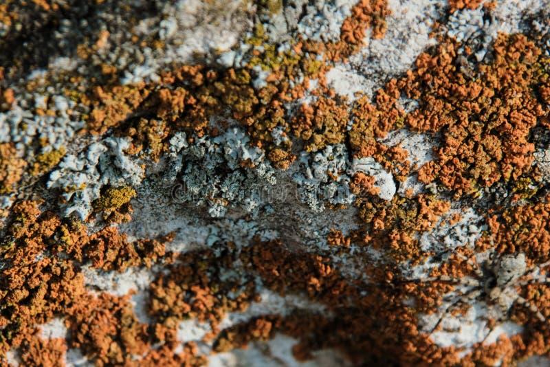 Lichen sur une pierre, plan rapproché, champignons, modèle images stock