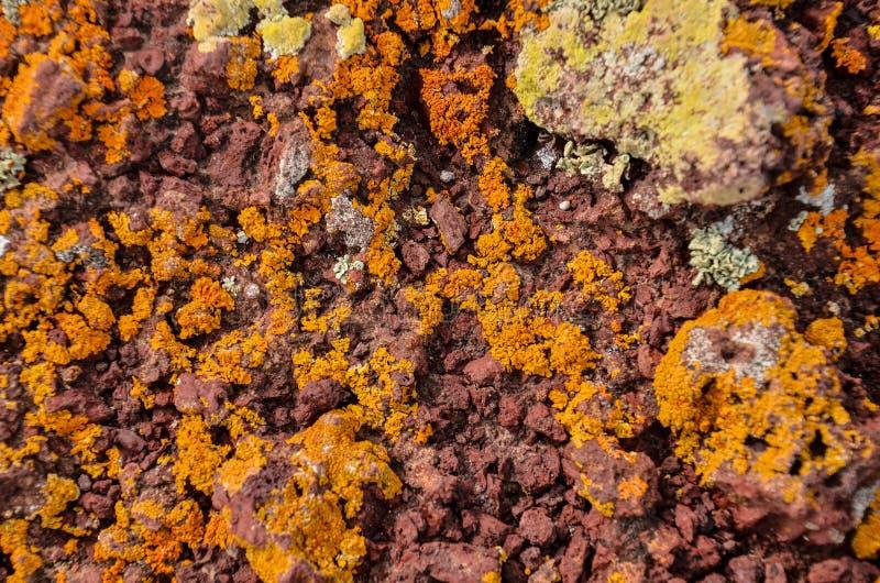 Lichen Texture Pattern imagen de archivo libre de regalías