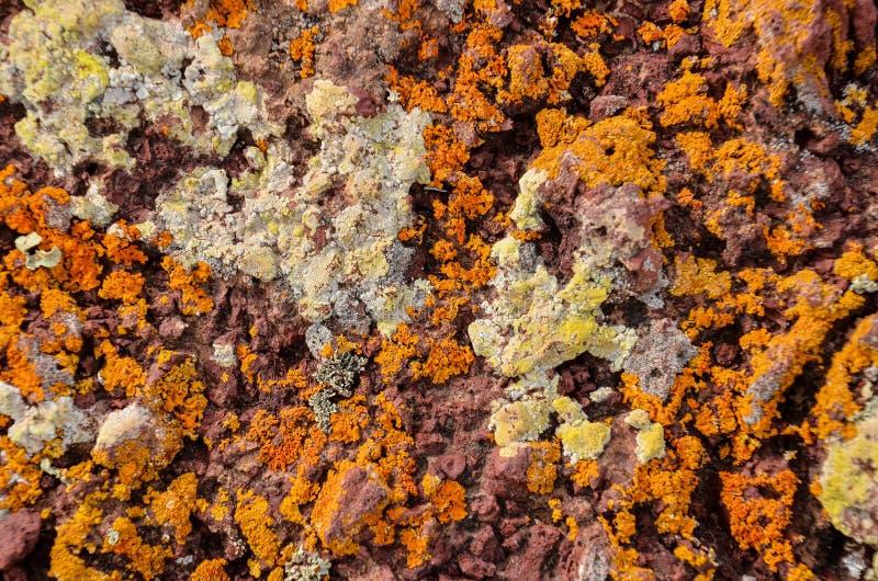 Lichen Texture Pattern imágenes de archivo libres de regalías