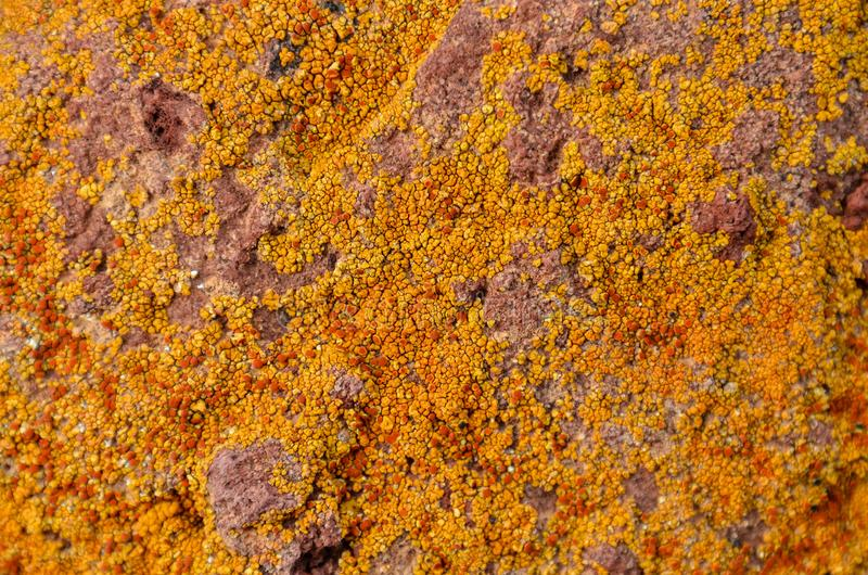 Lichen Texture Pattern fotografía de archivo