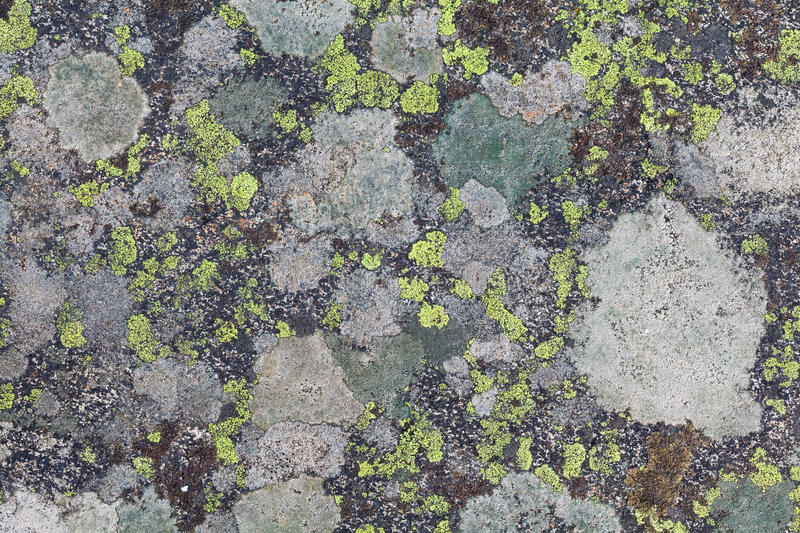 Lichen textures royalty free stock images