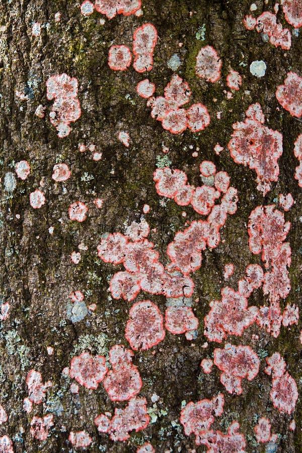 Lichen on tree bark royalty free stock photos