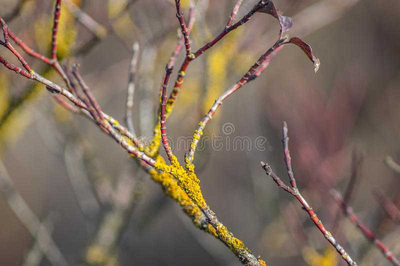 Lichen on a tree branch in autumn. Close up royalty free stock images