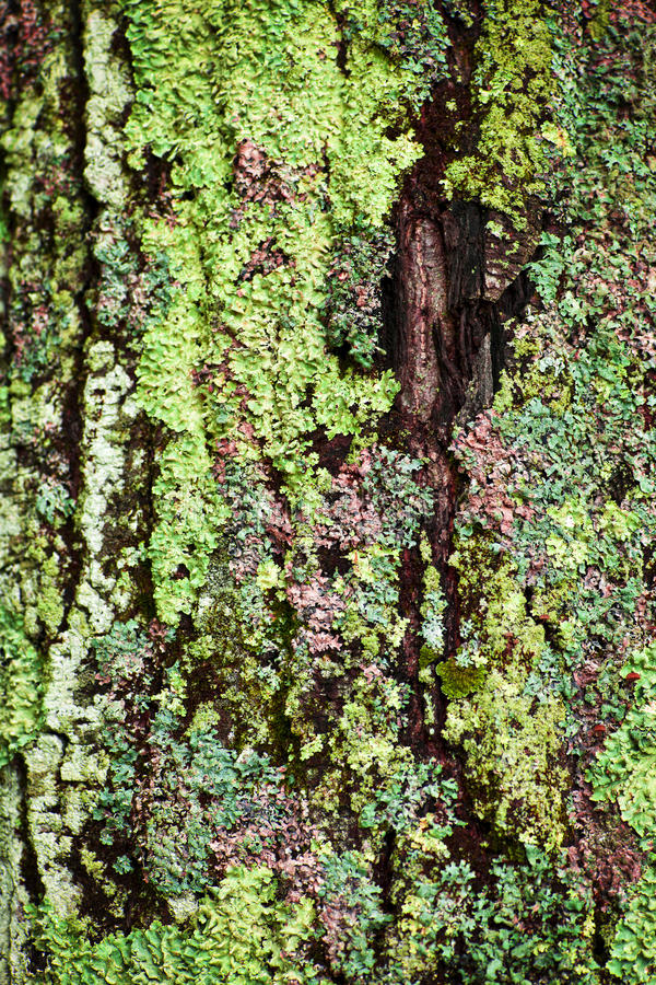 Download Lichen on tree trunk stock image. Image of lichens, growing - 34236641