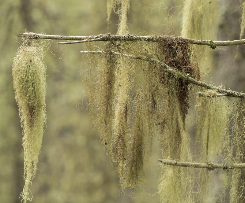Lichen stock images