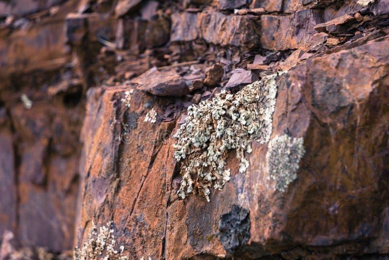 Licheni che crescono sulla roccia giurassica in Mt Diablo State Park immagini stock