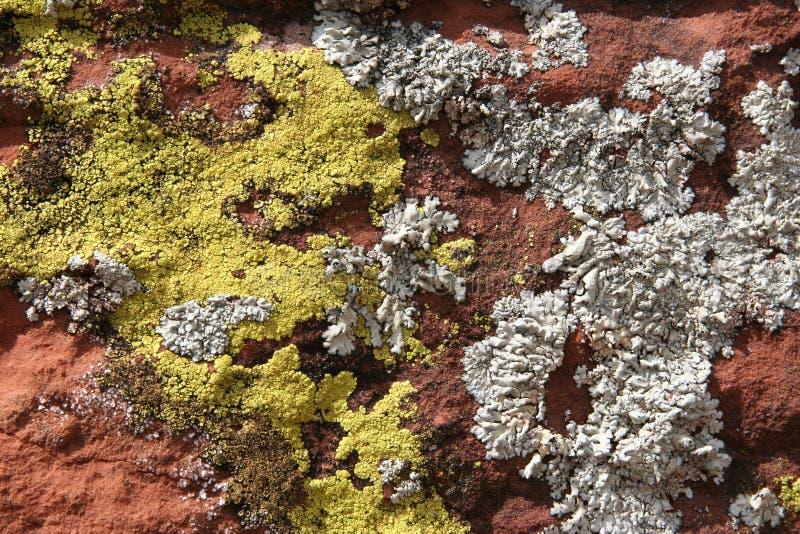 Lichens photographie stock libre de droits