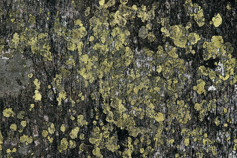 Download Lichens Royalty Free Stock Photos - Image: 26252718