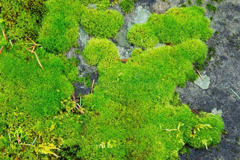 Lichens photographie stock