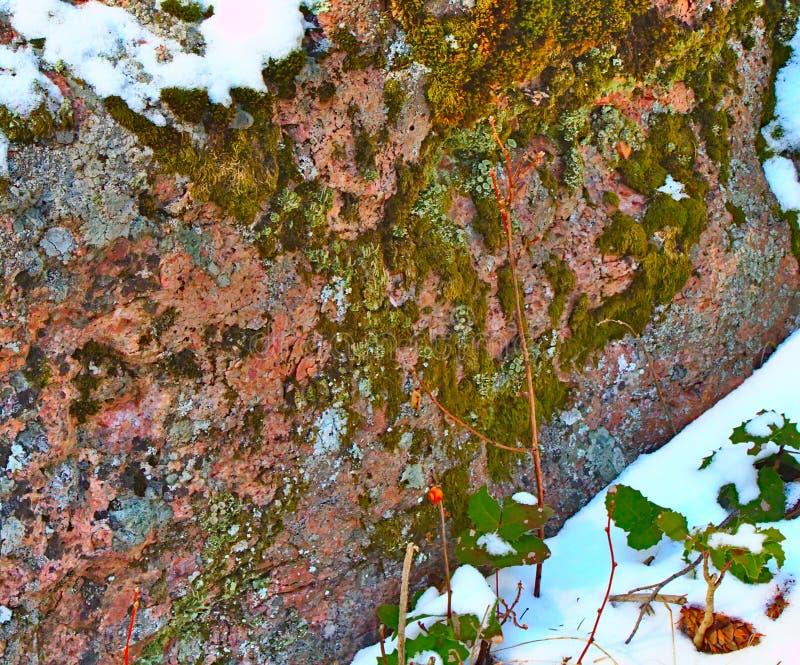 Lichens et mousse sur un rocher dans la forêt image stock