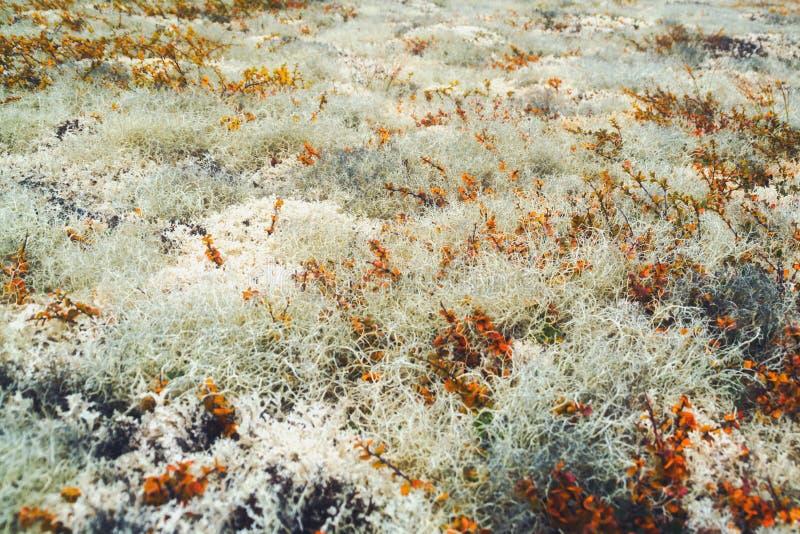 Lichens et usines dans la toundra image stock