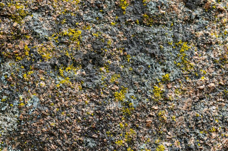 The lichens and moss as background old rock texture royalty free stock images