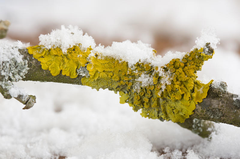 Lichens on tree stock image