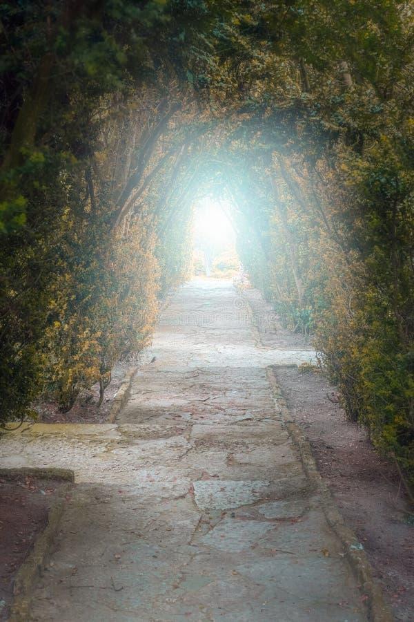 Licht aan het eind van de tunnel Groene natuurlijke tunnel van bomenwi stock afbeelding