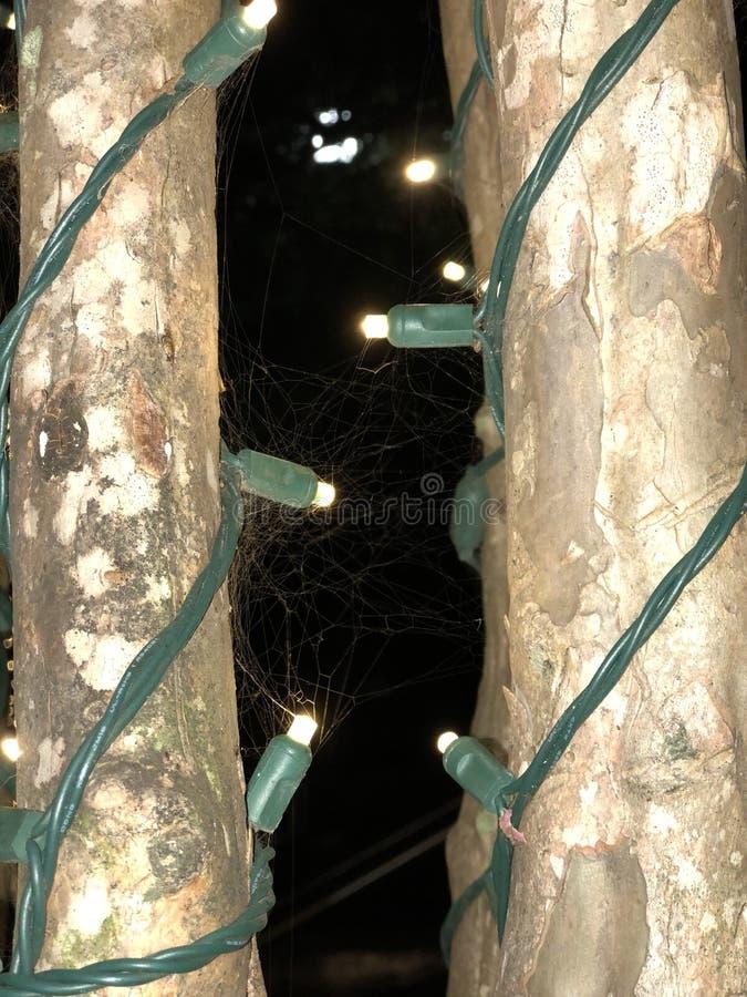 Licht, boom, spinneweb royalty-vrije stock afbeelding