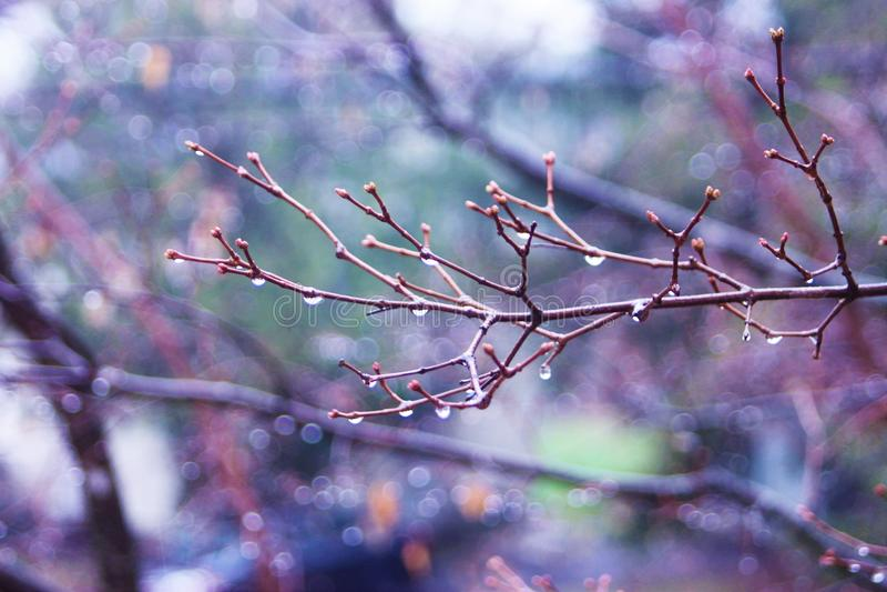 Licht des Baums morgens stockfoto