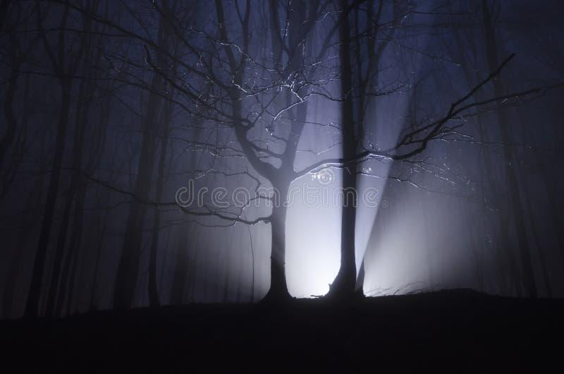 Licht in donker bos bij nacht op Halloween stock foto's