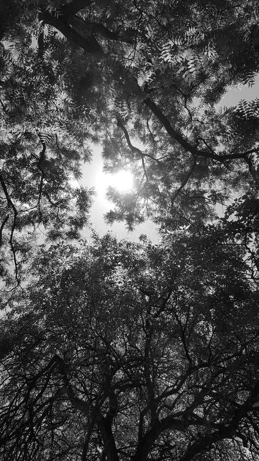 Licht door bladeren stock afbeeldingen