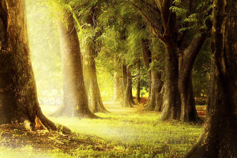 Licht door de groeven van de bomen in het bos royalty-vrije stock fotografie