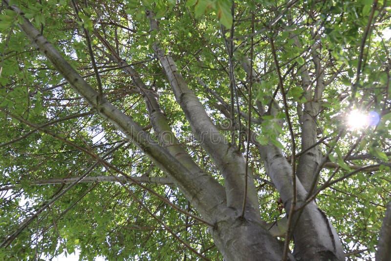 Licht durch Bäume am Mittag im Gewann lizenzfreies stockbild