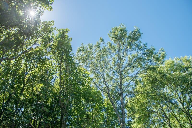 Licht durch den Wald stockbilder