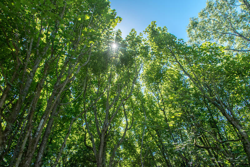 Licht durch den Wald lizenzfreie stockfotografie