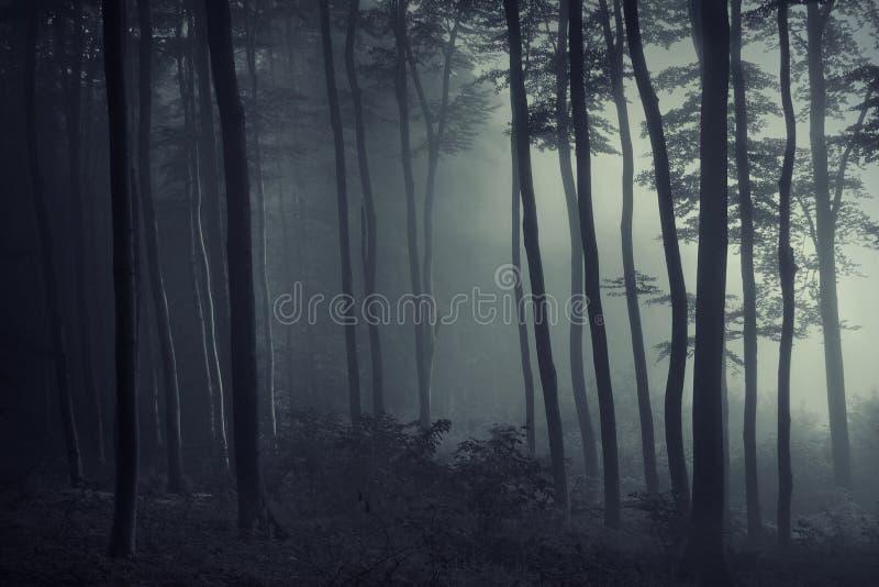 Licht en schaduw in het bos royalty-vrije stock fotografie