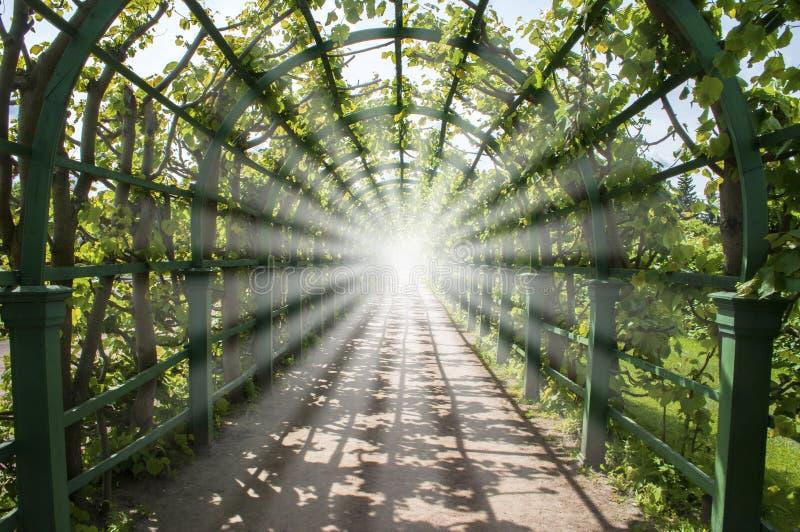 Licht in het eind van groene tunnel royalty-vrije stock afbeelding