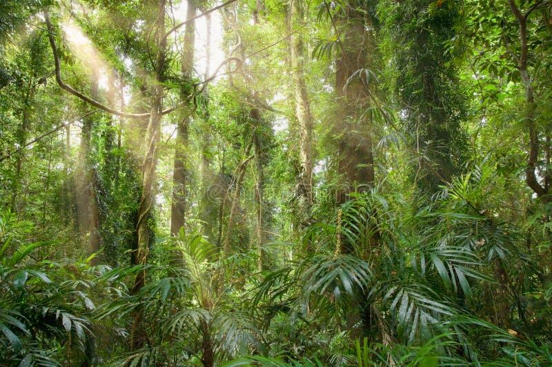Licht in het regenwoud royalty-vrije stock afbeeldingen