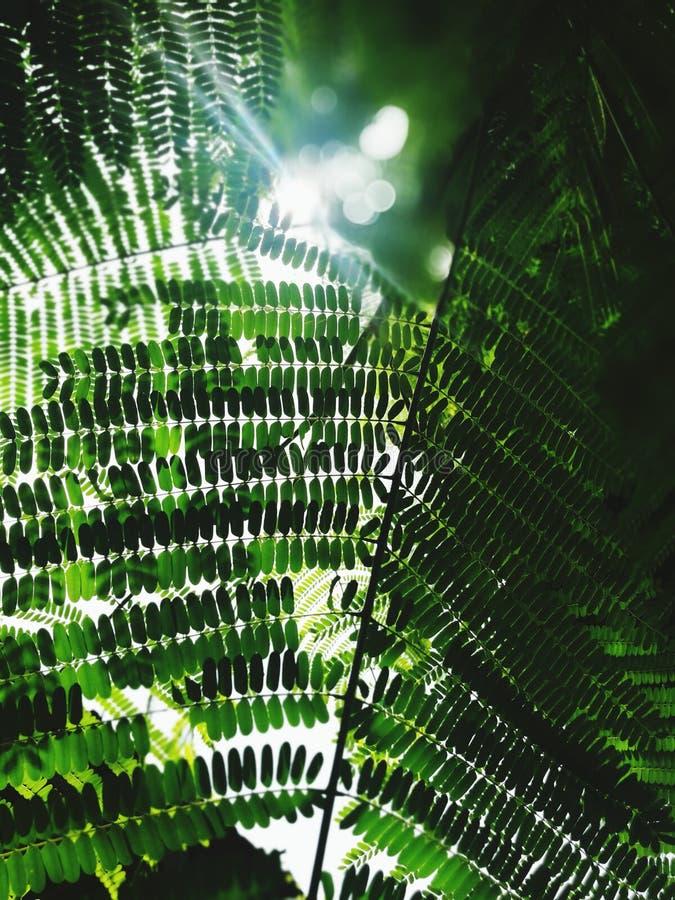 Licht im Leben lizenzfreies stockfoto
