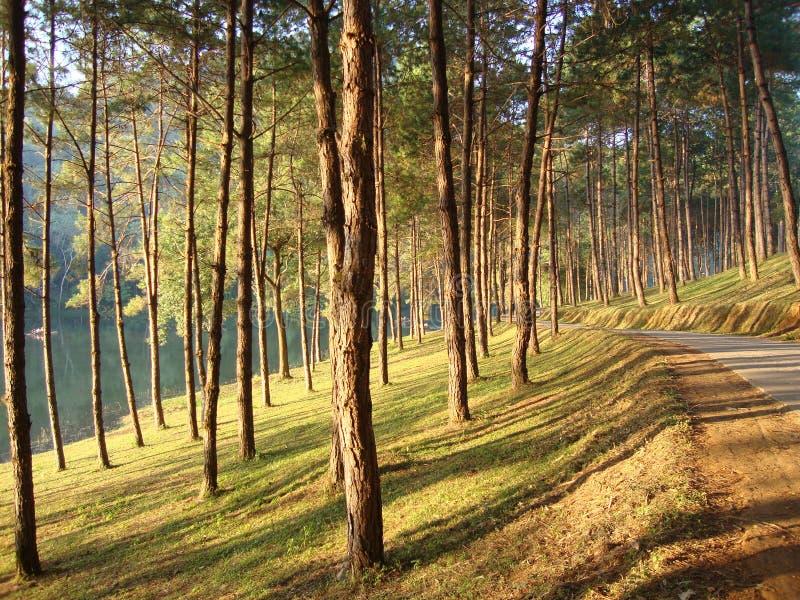 Licht im Wald lizenzfreie stockfotografie