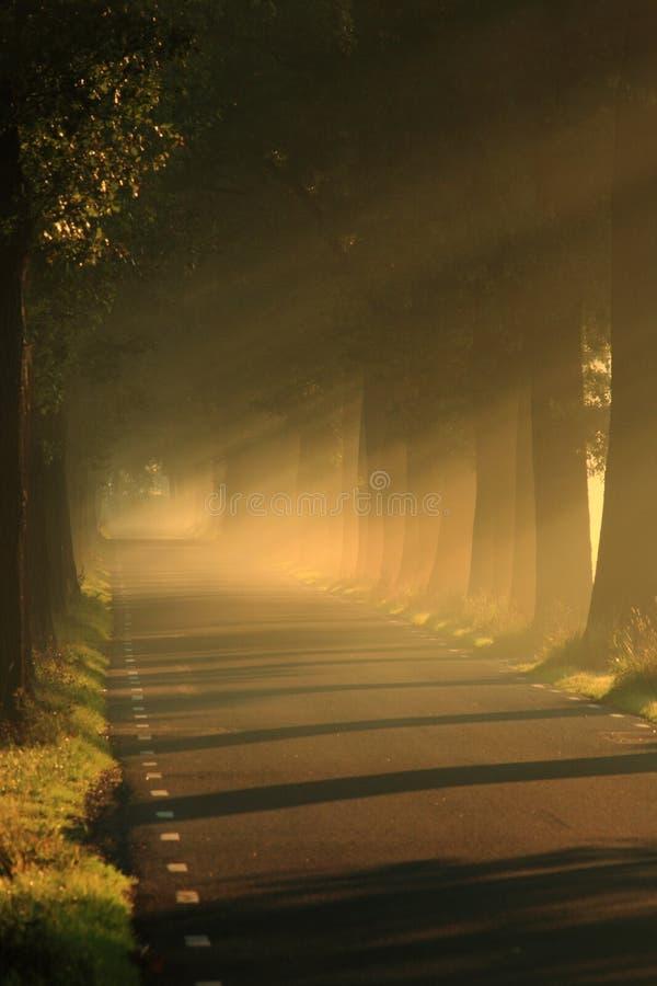 Licht op de weg met bomen