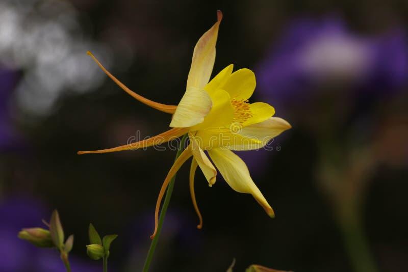 Licht und Blumen lizenzfreie stockfotografie