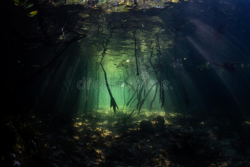 Licht und Schatten in Raja Ampat Mangrove Forest lizenzfreies stockbild