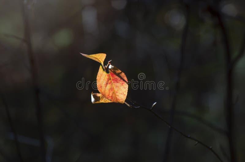 Licht van Hoopconcept: De bladeren die in Zonlicht in een Donkere Geheimzinnige Fantasie Forest Autumn gloeien, vallen Kleurrijk  royalty-vrije stock fotografie