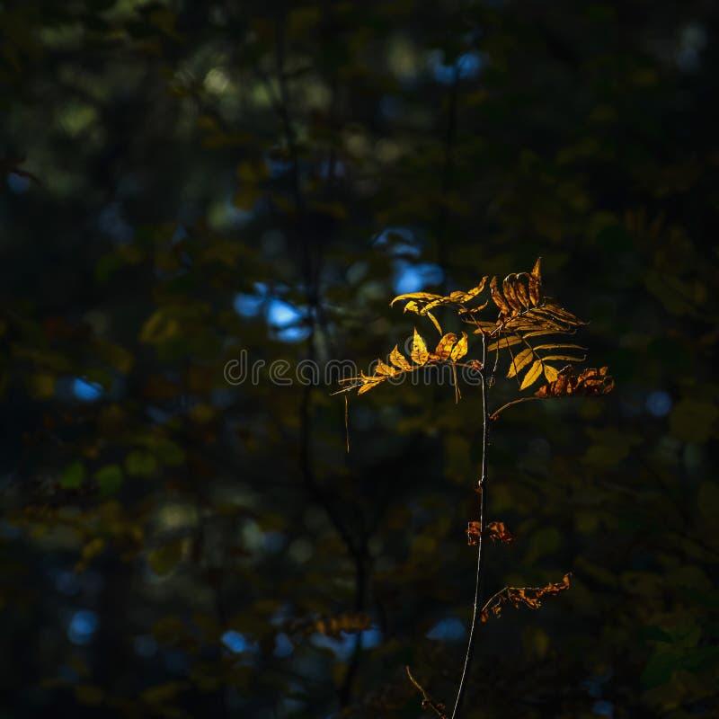 Licht van Hoopconcept: De bladeren die in Zonlicht in een Donkere Geheimzinnige Fantasie Forest Autumn gloeien, vallen Kleurrijk  royalty-vrije stock foto's