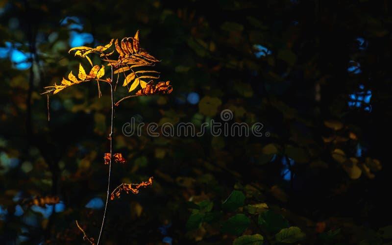 Licht van Hoopconcept: De bladeren die in Zonlicht in een Donkere Geheimzinnige Fantasie Forest Autumn gloeien, vallen Kleurrijk  stock foto's