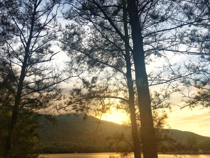 Licht van zonsondergang achter berg door tak van pijnboomboom in de avond royalty-vrije stock afbeeldingen