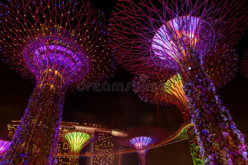 Licht verblinden toont in het Bosje en Marina Bay van Supertree in Zonde stock foto's