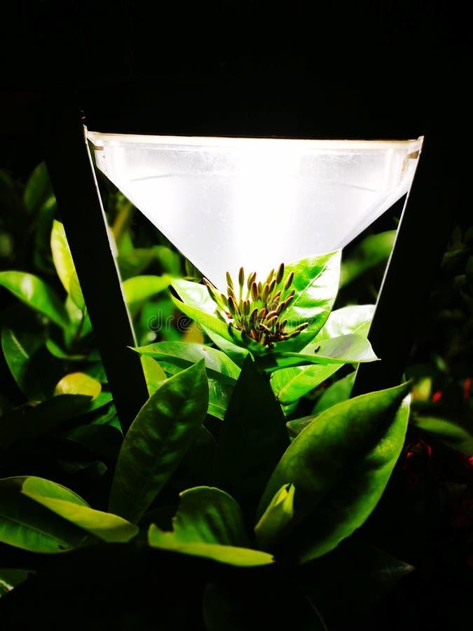 Licht von Blumen lizenzfreies stockfoto