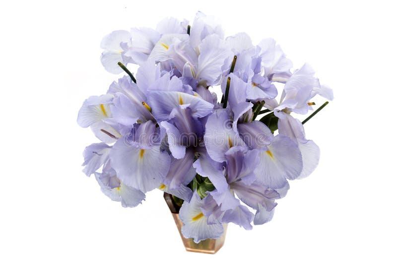 Lichtblauwe Gekleurde Iris Flower Isolated op Witte Achtergrond stock fotografie