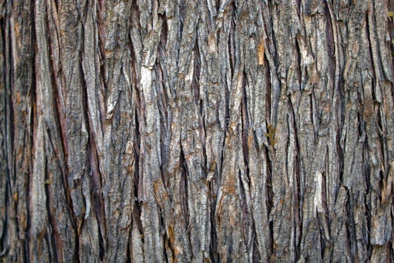 Lichtbruine schors van een boom royalty-vrije stock foto