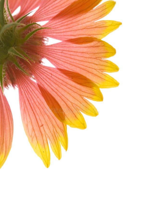 Lichtdurchlässige Schönheit lizenzfreies stockbild