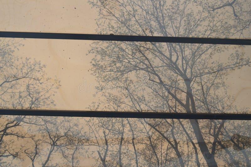Lichte dag in het park van Kiev stock afbeeldingen